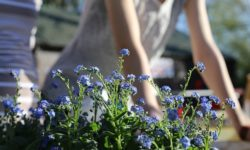 Four Tips For Making Your Yard More Stylish
